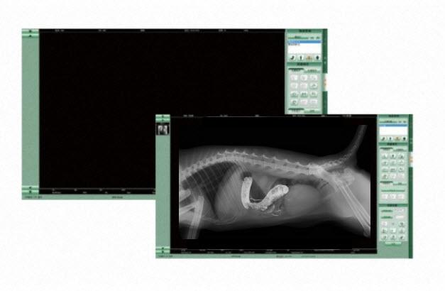 Digitale Flachbilddetektore für Pferdepraxis und Kleintierpraxis DR Detektor Nachrüstung digitales Röntgen reibungsloser Wechsel auf ein digitales Röntgensystem